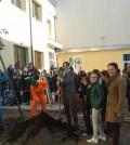 Alberi in piazza a Chioggia
