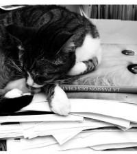 gattocristinacarbonin