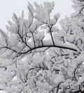 Neve-In-Veneto 2