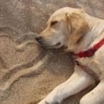 amore-per-cani