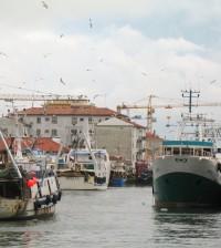 chioggia flotta peschereccia