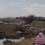 pulizia laguna sud 1