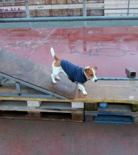 Dog Talent Chioggia