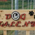 Dog Talent Chioggia