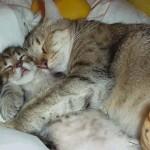 dormire-con-mamma-gatta