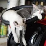gatti-al-volante