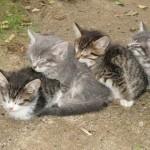 gatti-che-dormono-a-trenino