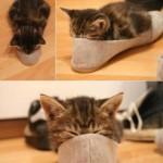gatto-che-dorme (1)