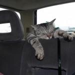 gatto-dorme-in-macchina