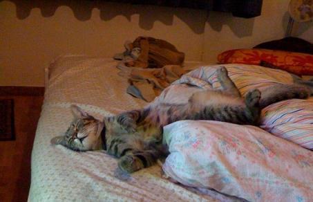 Dolce dormire chioggiatv - Perche i gatti fanno la pipi sul letto ...