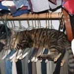gatto_appeso