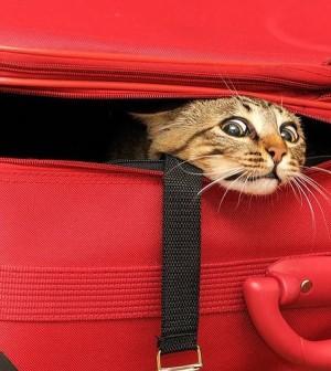 gatto vacanze
