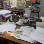 Marina la gatta sindaco