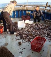 Pescatori al lavoro