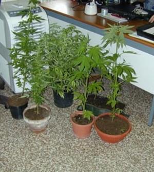 marijuana_1_original
