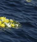Fiori del Papa a Lampedusa