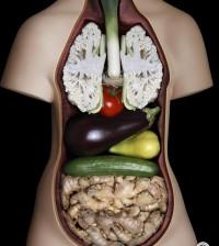 Vegetariano dannoso