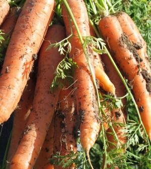 carote, ispica