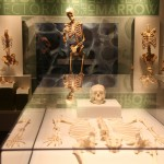skeletal gallery