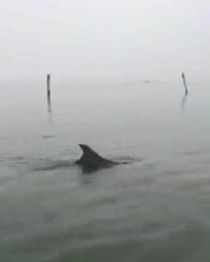 avvistamento delfino