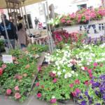 chioggia mercatini di primavera (1)