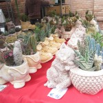 chioggia mercatini di primavera (15)