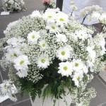 chioggia mercatini di primavera