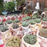 chioggia mercatini di primavera (16)