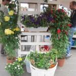 chioggia mercatini di primavera (4)