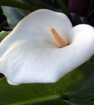 fiore-bianco-fiore-pianta_19-136321