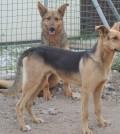 apa chioggia adotta un cane due lupetti