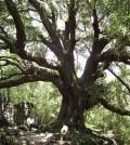 albero_1