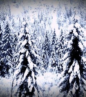 montagna neve