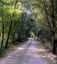 bosco nordio Chioggia