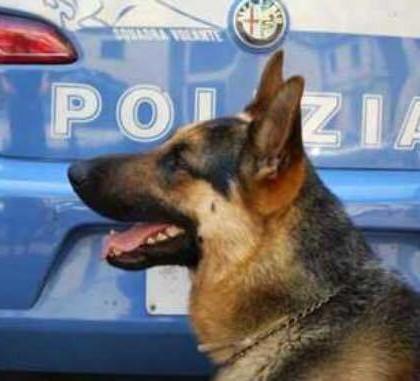 cane antidroga Polizia