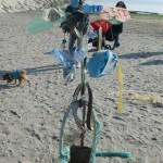 Amico Giardiniere pulizia spiaggia Sottomarina (14)