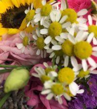 fioreria-piccole-gioie-di-irene-rosolina-