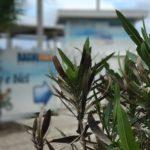 bagni miki sottomarina IMG_1523