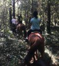 17Experience Passeggiata a cavallo