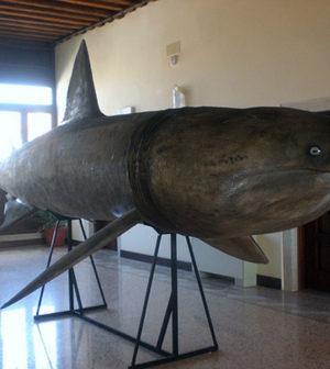 museo_zoologia_adriatica