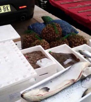 pesce sequestrato