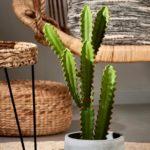 candelabrium-cactus-verde-h-57-cm