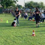 3dog talent scuola educazione cani chioggia padova