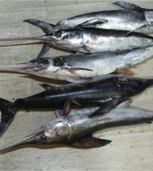 pesce-spada-