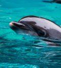 delfini chioggia