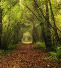 restivo-bosco-nordio2